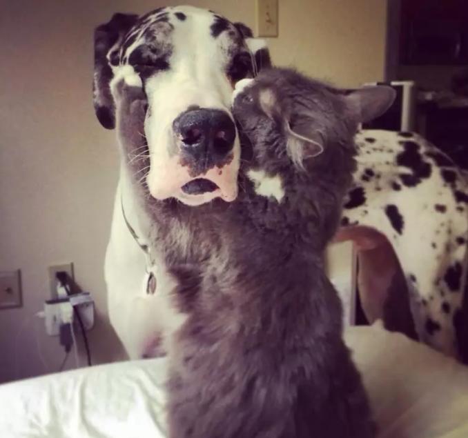 շուն և կատու