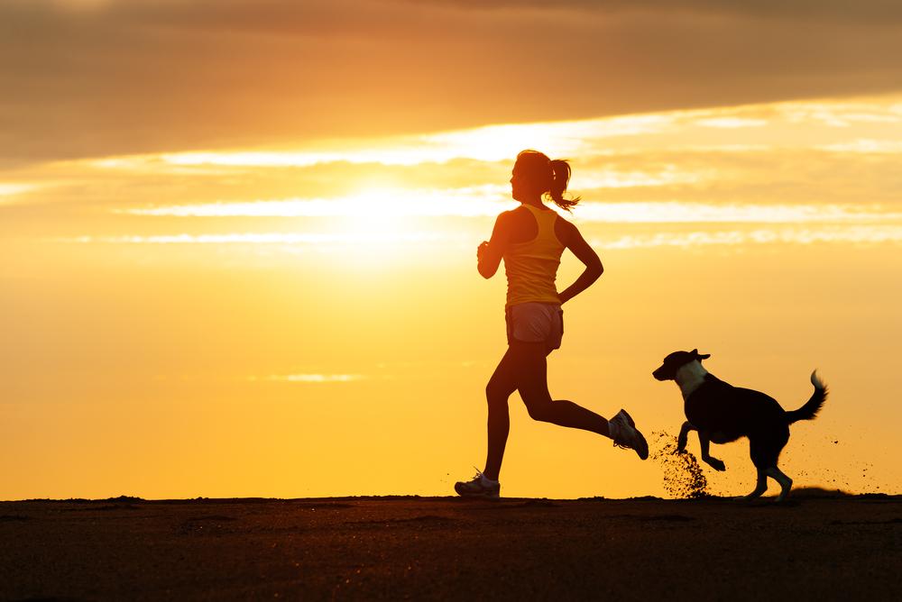 Շունը կարող է ընկերակցել Ձեզ, նույնիսկ վազելիս