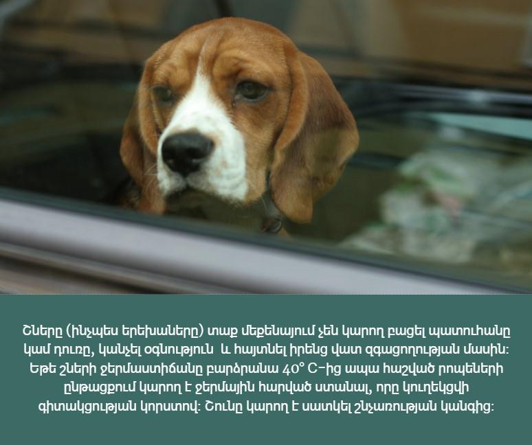 Շները չեն կարող  բացել դուռը կամ պատուհանը