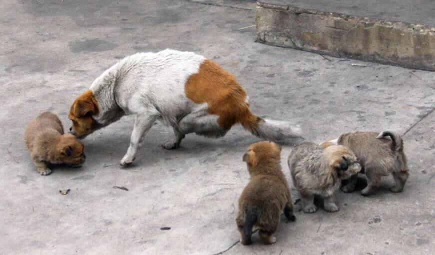 Շի Բաոի ձագուկները