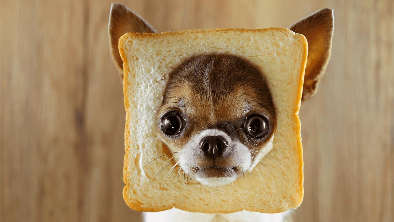 Խմորիչով պատրաստված խմորեղեն վտանգավոր է շների համար