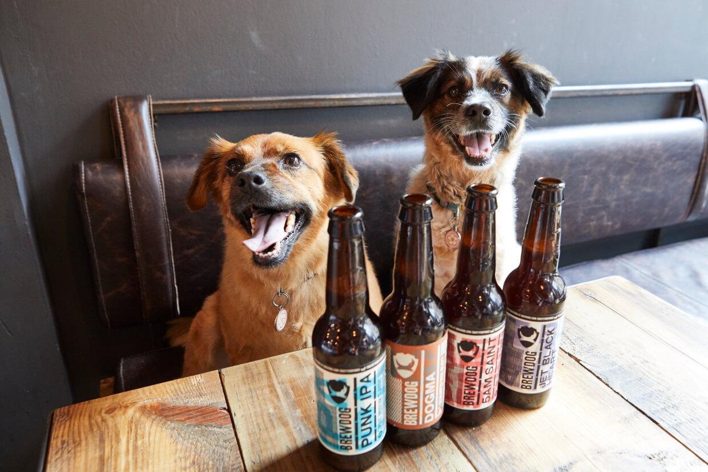 Շներին արգելված է Ալկոհոլը