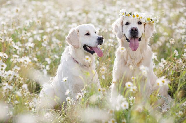 Շների մոտ վիտամինների պակաս է զգացվում հատկապես գարնան