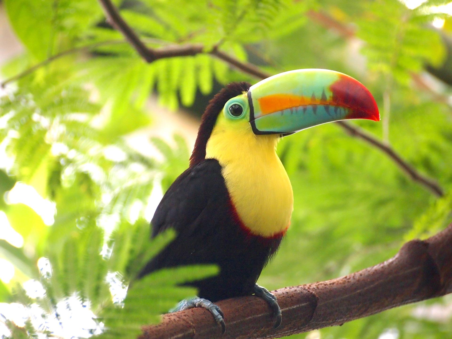 tarorinak-ktucov-artasovor-trchun-toucan