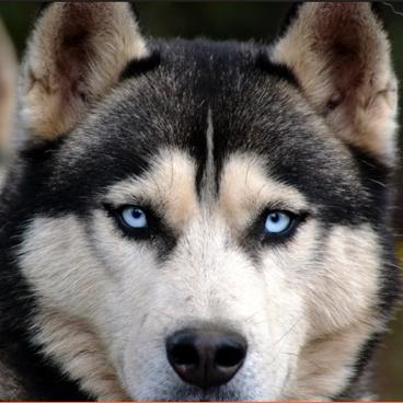 Dog content2