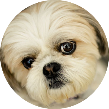 Dog content1